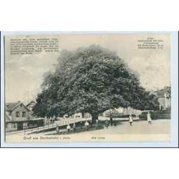 W0P18/ Bordesholm in Holst. Alte Linde Baum  AK 1913