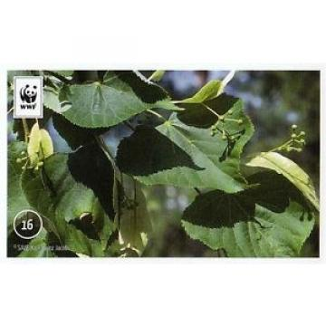 Edeka WWF Unser Wald Sticker Nr. 16 Sommer-Linde NEU 2013 016