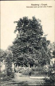 Ak Annaberg Buchholz Erzgebirge, Historische Linde auf dem alten... - 1579897