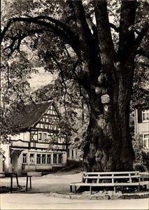 Ak Thal Ruhla im Wartburgkreis Thüringen, 600jährige Linde, Konsum... - 1486286