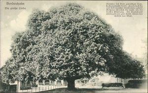Ak Bordesholm in Schleswig Holstein, Die große Linde - 1695480
