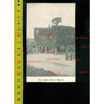 v1903-  die Prestner Linde in Thurnau