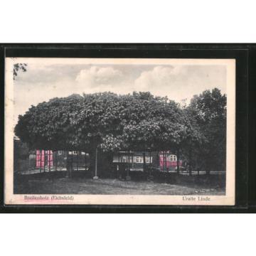 tolle AK Breitenholz, Uralte Linde 1934