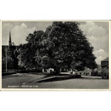 Ak Bordesholm in Schleswig Holstein, 600 jährige Linde - 1064762