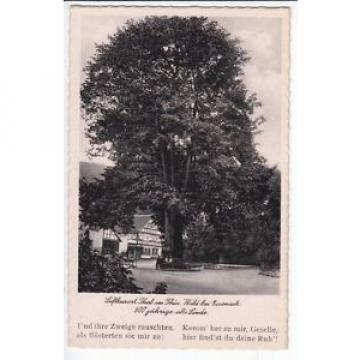 Ak  THAL/ Thür.   600 jährige alte LINDE    um 1935  (a .. 67 054 )  N