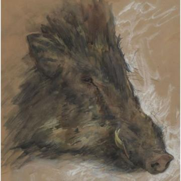 Hermann Linde * 1863: Indian wild boar. Watercolor. Dholpur / India 1894