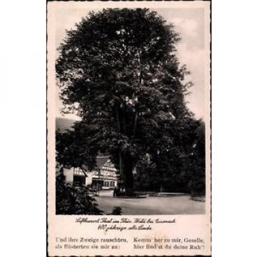 Ak Bad Thal Ruhla Thüringen, Gasthaus zur Linde, 600jährige alte Linde - 840502