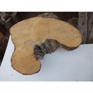1x Linde Holzscheibe (sehr gut geeignet als Beistelltischplatte)
