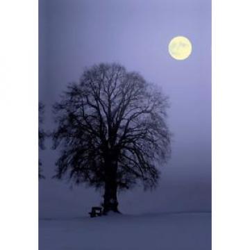 Premium Textil-Leinwand 30 cm x 45 cm hoch Linde im Mondlicht Leinwand