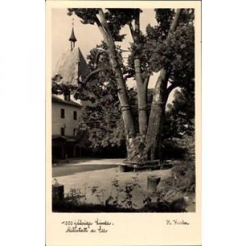 Ak Millstatt am See in Kärnten, Partie an der 1000jh Linde - 1540199