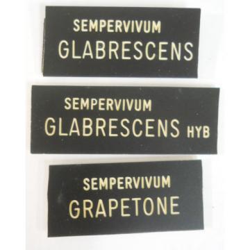 HENS 'n CHICKS Plant ID Labels Engraved Plastic choose 41 varieties Sempervivum