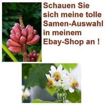 Exot Pflanzen Samen Saatgut exotische Zimmerpflanze ZIMMERLINDE + ROSA BANANE